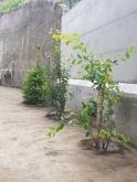 Plantation d'arbustes indigènes