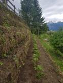 Plantation de lierre
