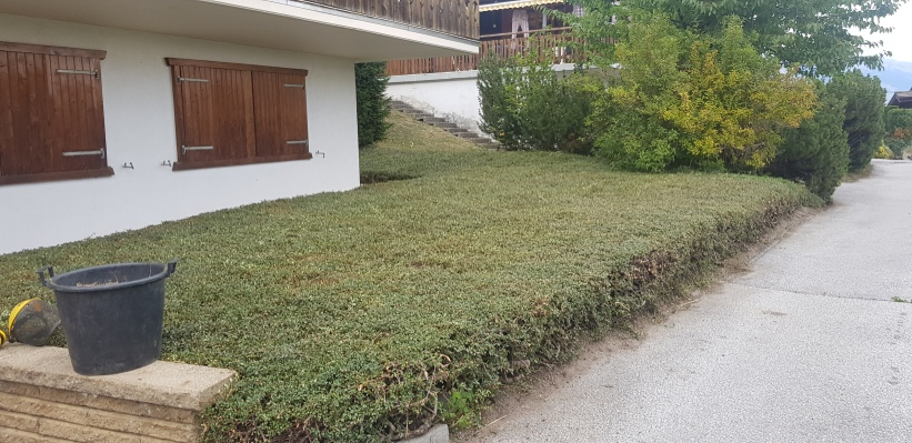 Taille de Cotoneaster